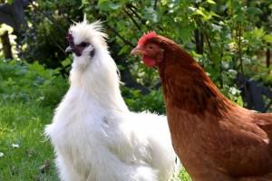 阴虚火旺能吃山鸡吗阴虚火旺吃什么好