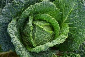 白菜辟谷是否可以减肥辟谷期间吃白菜可以减肥吗